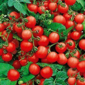Томат Красная Шапочка: характеристика и описание сорта, отзывы