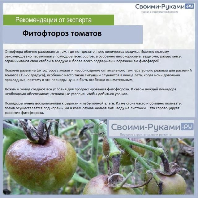 Томат Жаворонок: характеристика и описание сорта