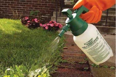 Осот: как избавиться на участке, способы борьбы с сорняком