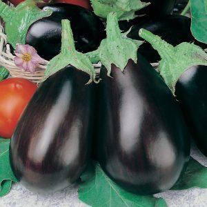 Баклажан Черный красавец: описание сорта, фото, отзывы
