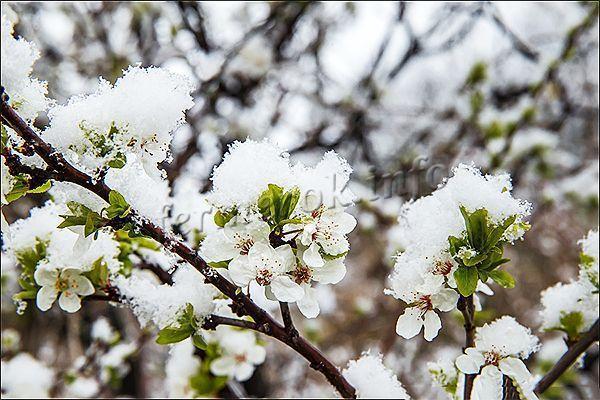 Чем подкормить груши весной: для роста, для урожая, сроки и правила подкормки