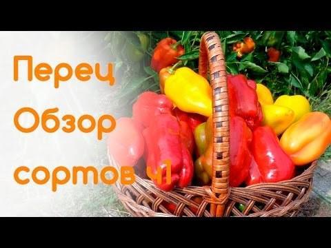Сорта и гибриды сладкого перца