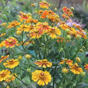 Садовые однолетние цветы на даче и в саду с фото и названиями