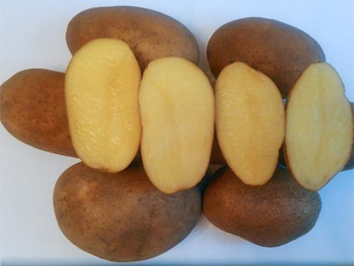 Картофель Скарб: характеристика сорта, вкусовые качества, отзывы