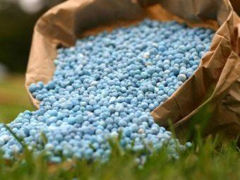 Клубника Маршал: описание сорта + фото, отзывы садоводов