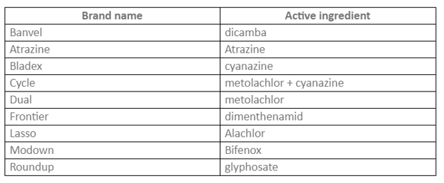 Гербицид для кукурузы: как выбрать, какие бывают, как применятьГербицид для кукурузы: как выбрать, какие бывают, как применять