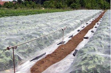 Посадка клубники осенью на агроволокно: как правильно посадить, видео