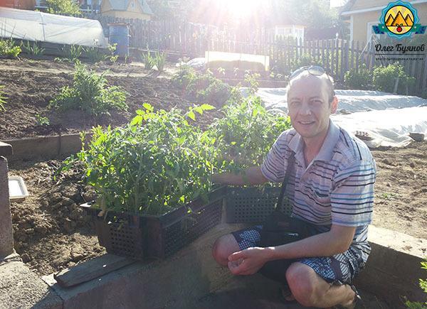 Когда сажать рассаду томатов для открытого грунта