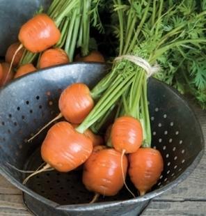 Посев моркови в Ленинградской области
