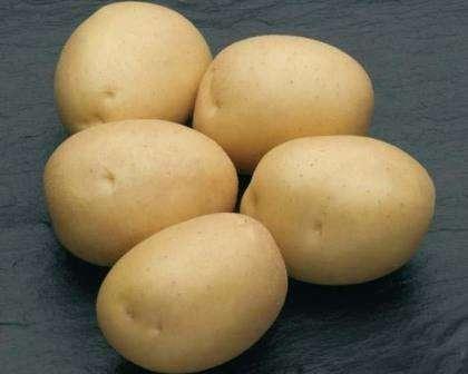 Описание сорта картофеля Наташа
