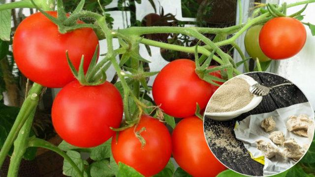 Дрожжи для подкормки помидоров в открытом грунте