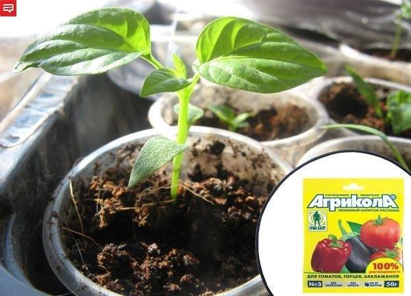 Чем подкармливать рассаду помидор и перцев