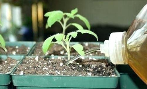 Удобрение томатов сульфат калием