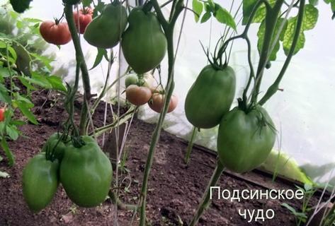 Томат Минусинские стаканы: описание сорта, отзывы, фото, урожайность