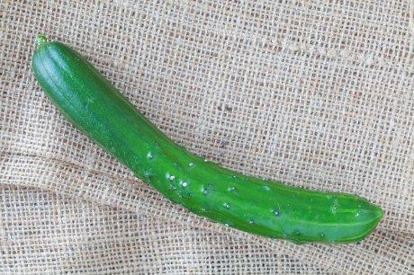 Огурец Китайский змей: описание сорта, отзывы, фото, можно ли солить
