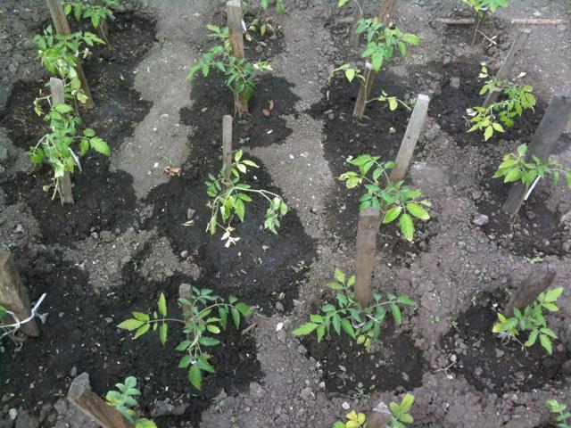 Препараты для рассады томатов