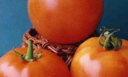 Томат Линда f1: описание сорта, фото, отзывы