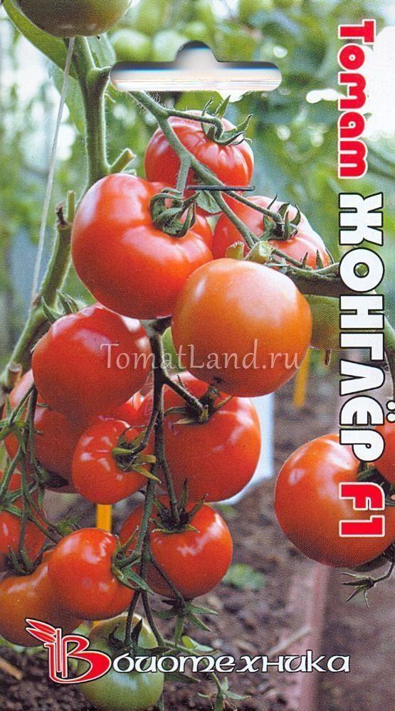 Томат Жонглер f1: описание сорта, фото, отзывы