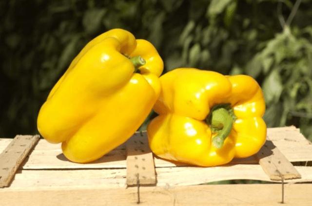 Лучшие толстостенные перцы