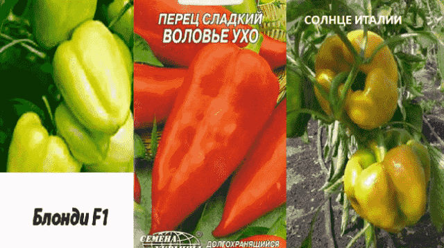 Самые высокоурожайные для открытого грунта сорта перцев