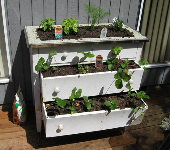 Выращивание клубники в ящиках на улице