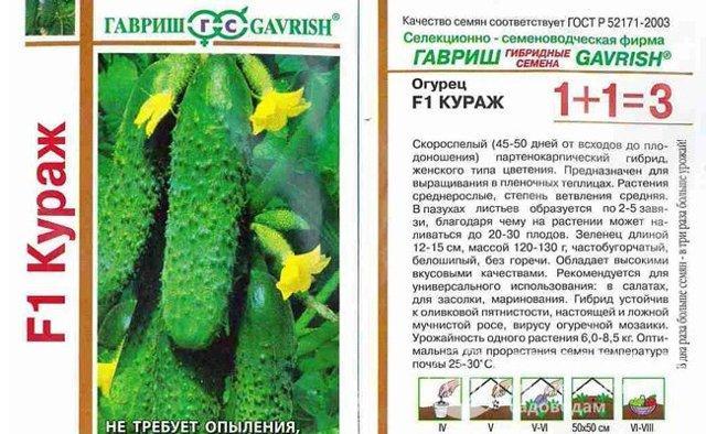 Огурец Кураж f1: описание сорта, фото, отзывы, выращивание в теплице и открытом грунте
