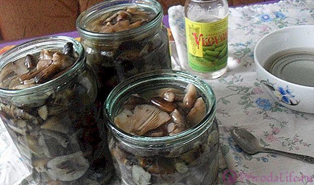 Засолка опят горячим способом на зиму: рецепты с уксусом, без уксуса, в стеклянной банке, в кастрюле