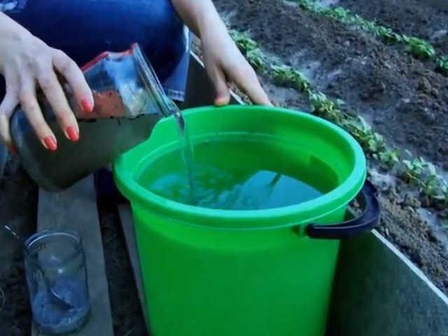 Подкормка для баклажанов в открытом грунте