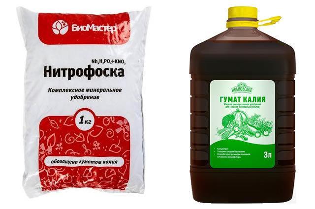 Крыжовник Медовый: описание сорта, фото, отзывы