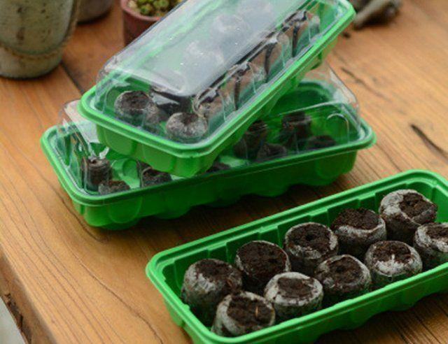 Бегония из семян в домашних условиях: посадка и выращивание, фото