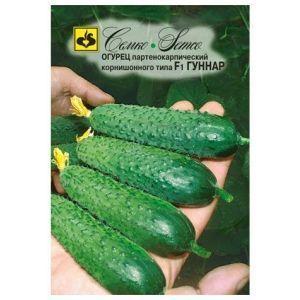 Огурец Гуннар f1: описание, отзывы, технология выращивания, фото