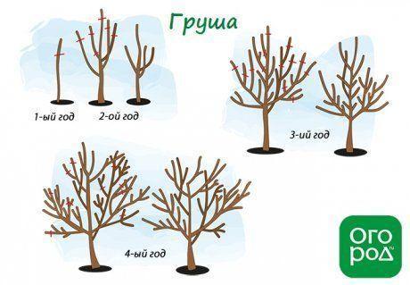 Обрезка плодовых деревьев весной