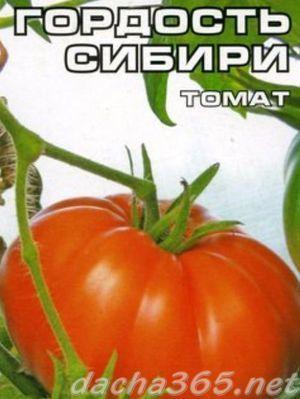 Томат Гордость Сибири: характеристика и описание сорта