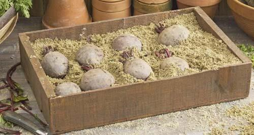 Как хранить свеклу зимой в погребе: правильное хранение.