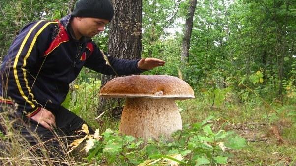 Выращивание белых грибов в домашних условиях: как вырастить дома, видео