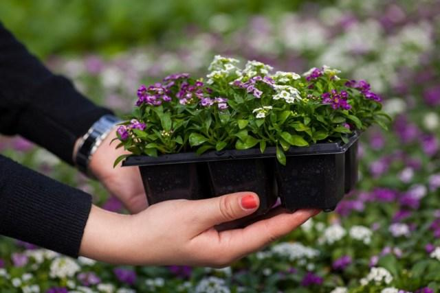 Цветы однолетники для сада: неприхотливые и долгоцветущие