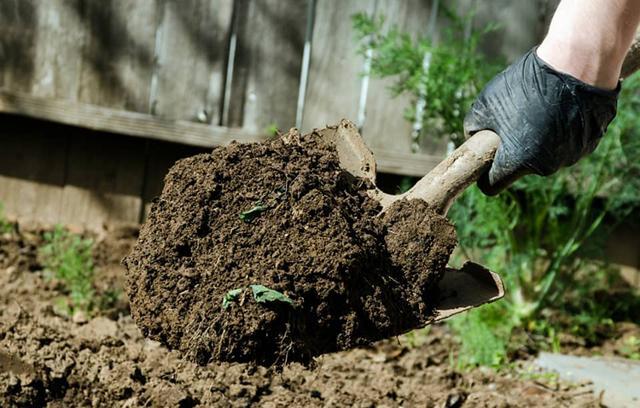Перец Бутуз: описание сорта, выращивание, фото, отзывы