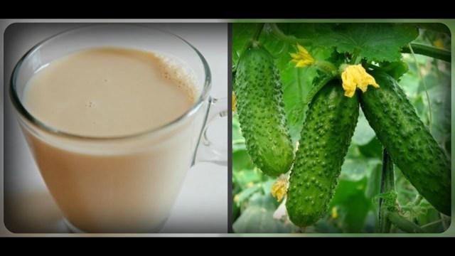Подкормка огурцов молоком и йодом