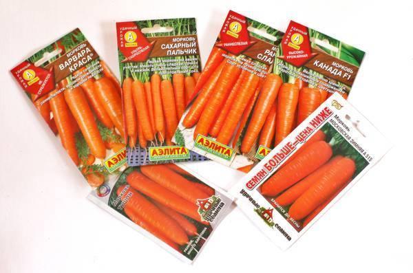 Сажаем морковь на туалетной бумаге