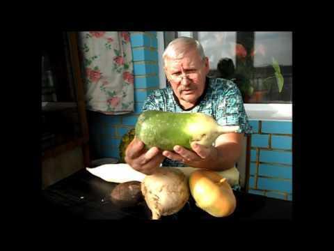 Маргеланская редька: фото, польза и вред, рецепты приготовления, калорийность
